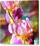 Rainbow Irises Canvas Print