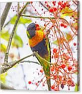 Rainbow Lorikeet In Flame Tree Canvas Print