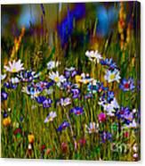 Rainbow Meadow Canvas Print