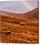 Rainbow Over Grizzly In Denali Canvas Print