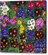 Rainbow Petals Canvas Print