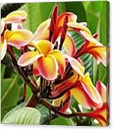 Rainbow Plumeria - 1 Canvas Print