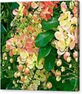 Rainbow Shower Tree Canvas Print