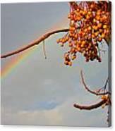 Rainbow Through Tree Canvas Print