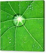 Raindrop Junction Canvas Print