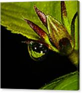 Raindrop Reflections Canvas Print