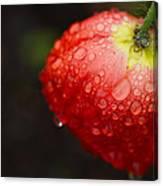 Raindrops And Poppy Canvas Print