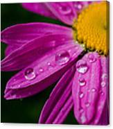 Raindrops On Daisies Canvas Print