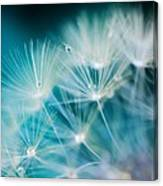 Raindrops On Dandelion Sea Blue Canvas Print