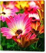 Raindrops On Flower Canvas Print