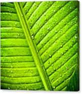 Raindrops On Green Leaf Canvas Print
