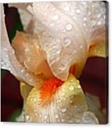Raindrops On Orange Iris Canvas Print