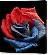Raindrops On Rose Canvas Print