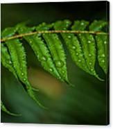 Rainfall On Leaf Canvas Print