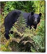 Rainforest Black Bear Canvas Print