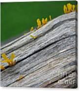 Rainforest Blooms Canvas Print