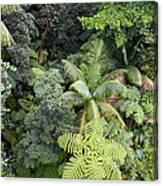Rainforest Canopy Canvas Print