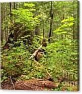 Rainforest Green Everywhere Canvas Print