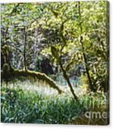 Rainforest Landscape Canvas Print
