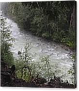 Rainforest River Canvas Print
