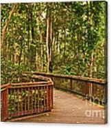 Rainforest Walkway Canvas Print