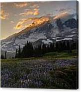 Rainier Purple Lupine Carpet Canvas Print