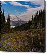 Rainier Tipsoo Wildflowers Canvas Print