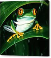 Rainy Day Frog Canvas Print
