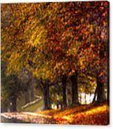 Rainy Day Path Canvas Print