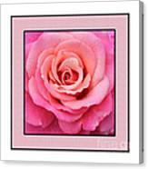 Rainy Day Rose Square Canvas Print