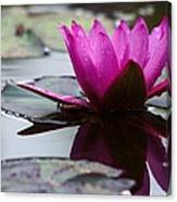 Rainy Day Water Lily Reflections 6 Canvas Print