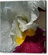 Rainy Orchid Canvas Print