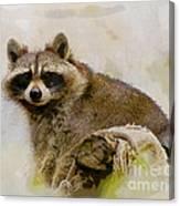 Rakish Raccoon  Canvas Print