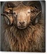 Ram Portrait Canvas Print