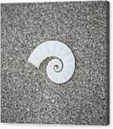 Rams' Horm Shell Canvas Print