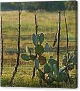 Ranch Cactus Canvas Print