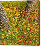 Ranch Wildflowers And Trees 2am-110522 Canvas Print