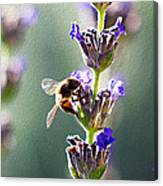 Random Lavender Sampling Canvas Print
