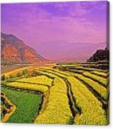 Rapeseed Terraces Canvas Print