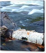 Rapids And Birch Canvas Print