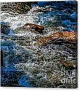 Rapids On The Gore Canvas Print