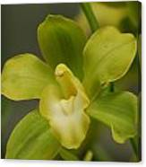Rare Green Orchid Canvas Print