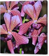Rare Orchids Canvas Print