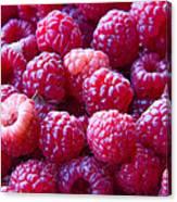 Homegrown Organic Raspberries, Chiloquin Oregon Canvas Print