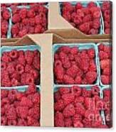 Raspberry Pints In Cardboard Flats Canvas Print