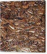 Rattle Snake Round-up Canvas Print