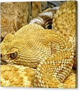 Rattler's Repose Canvas Print