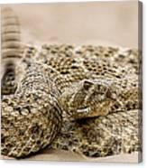 Rattlesnake 1 Canvas Print