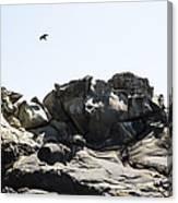 Raven Flying Over Tafoni Canvas Print