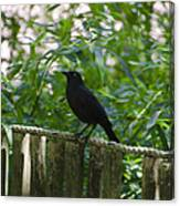 Raven In The Wild Canvas Print